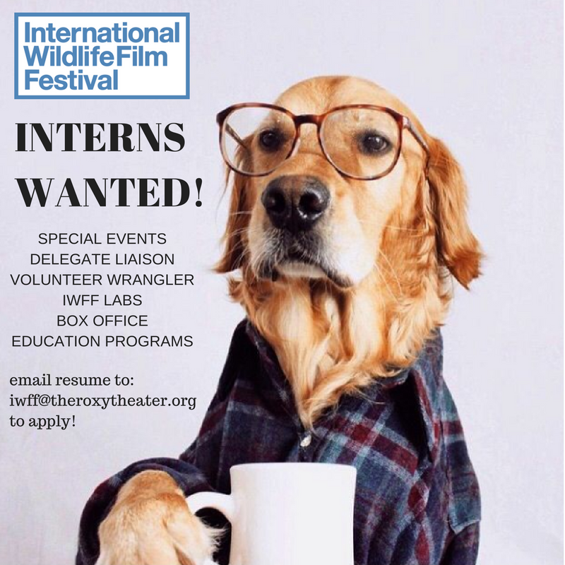 interns-wanted
